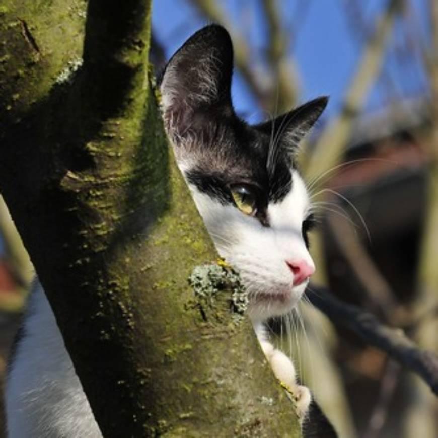 H 1 Katze auf Baum